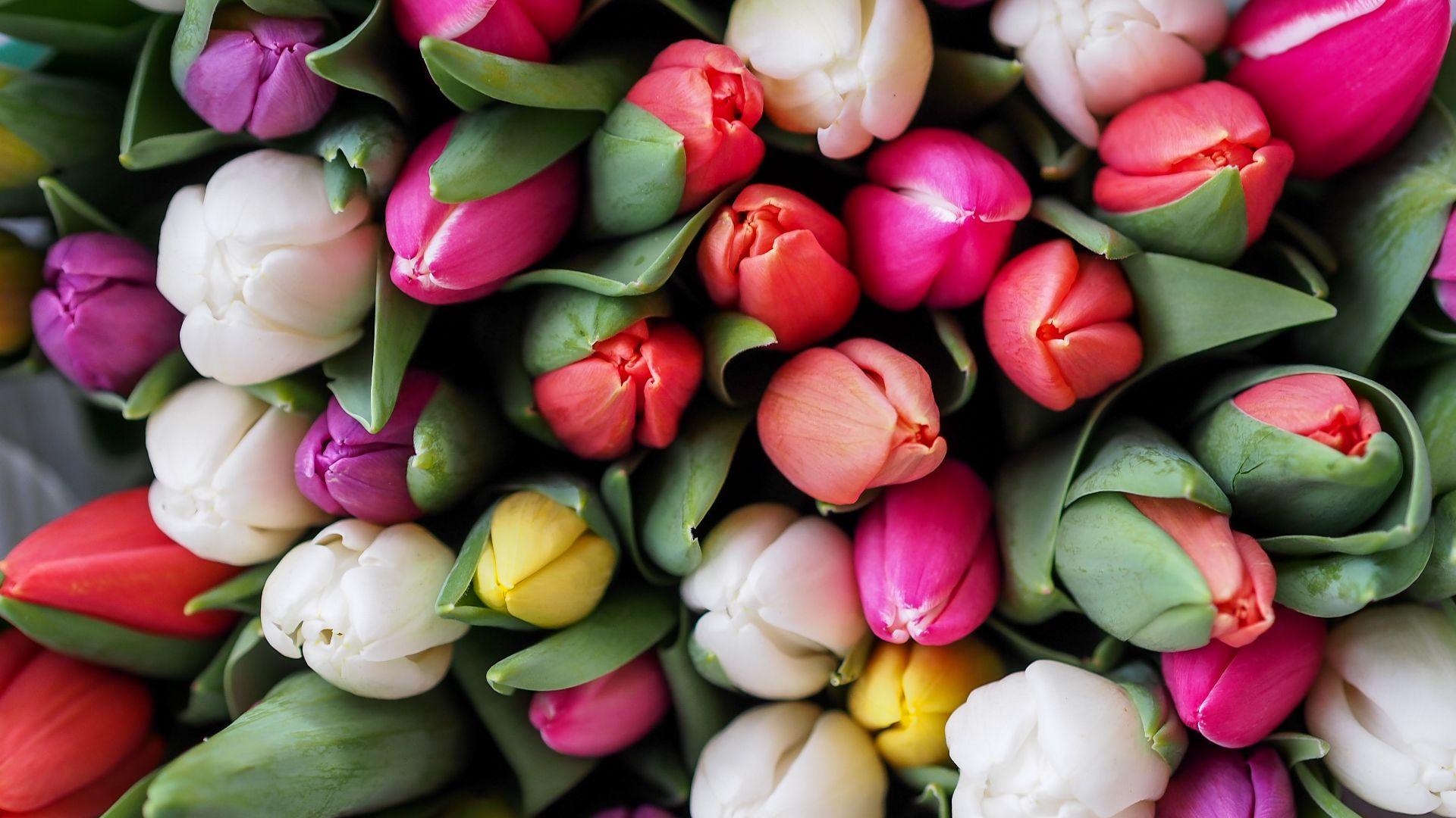 ein Bündel gelber, lila und weißer Tulpen